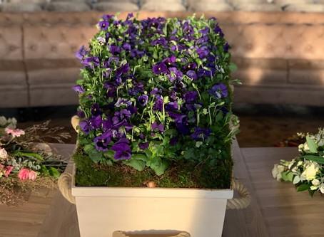 Een bed van viooltjes