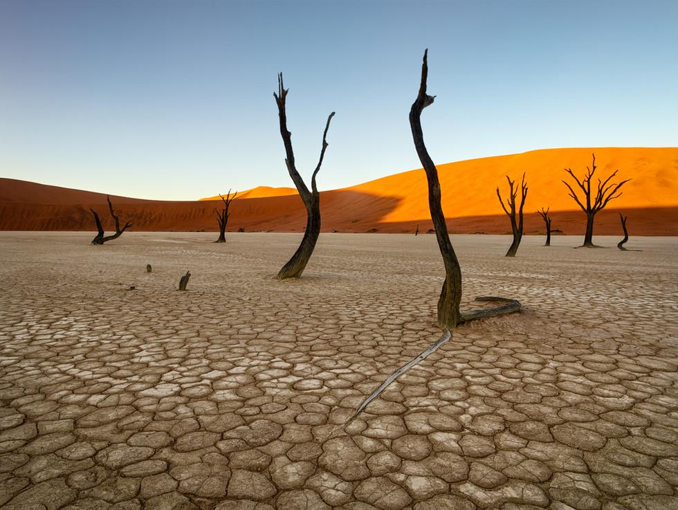 Trees of Deadvlei.jpg