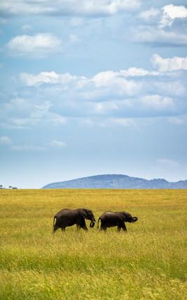 Elephants on the Open Plain.jpg
