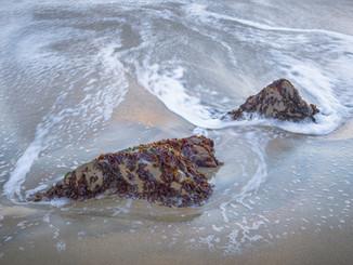 Seaweed Covered Rock.jpg