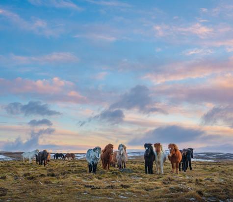 Icelandic Horses under a Painted Sky.jpg
