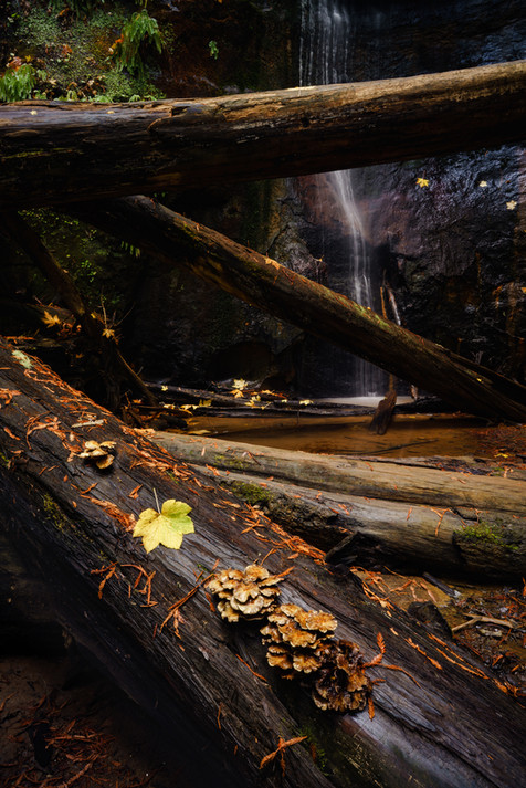 Growth and Silver Falls.jpg