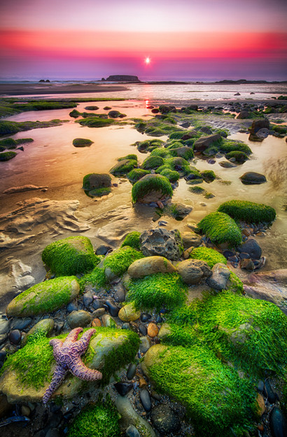 Tidepool Sunset.jpg