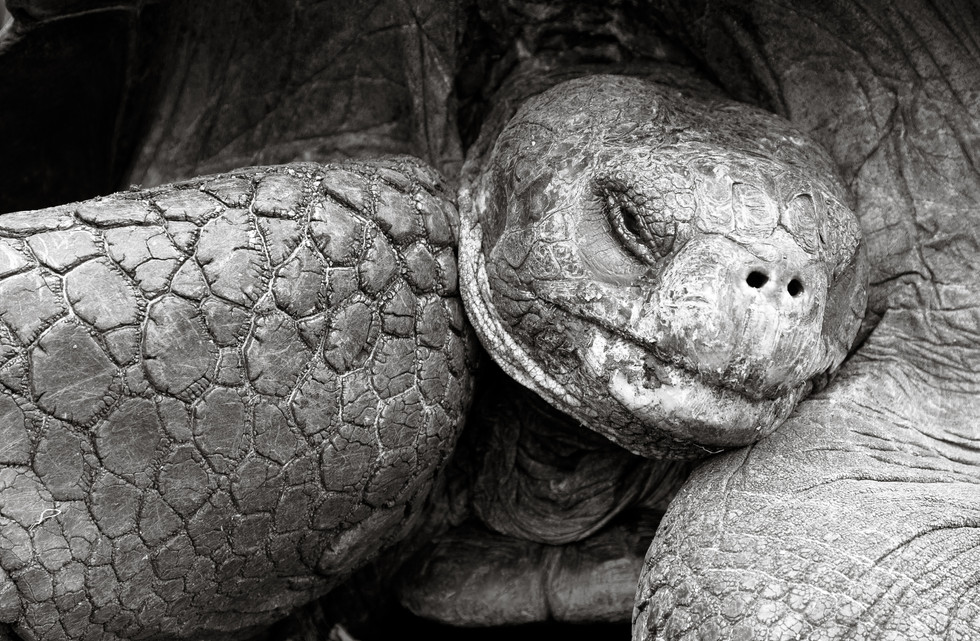 Shy Tortoise.jpg
