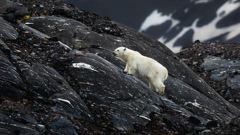 Little Bear Climbs a Mountain.jpg