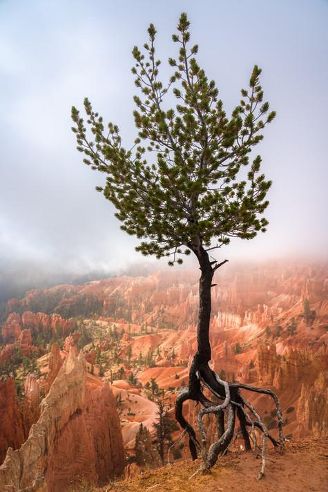 Tip Toe Tree.jpg