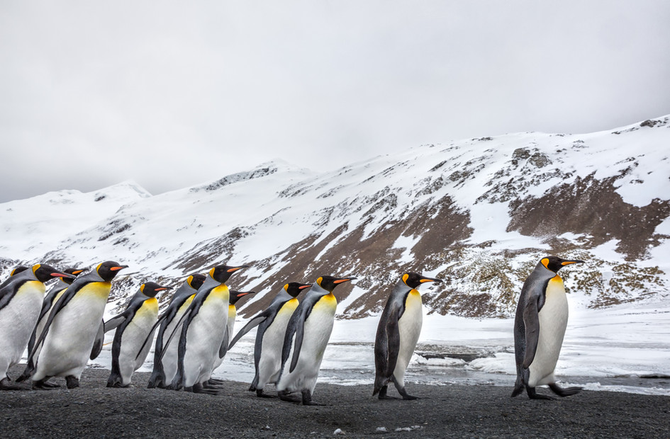 Penguin March.jpg