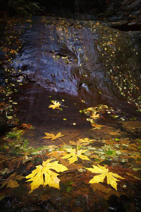 Fall in Golden Cascades.jpg