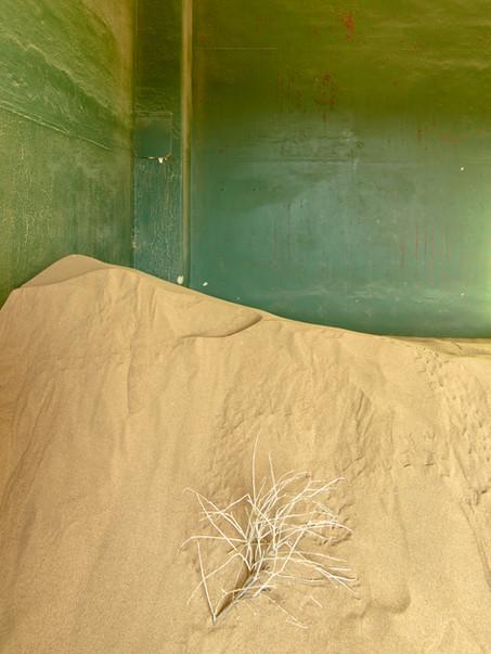 Desert Reclaims.jpg