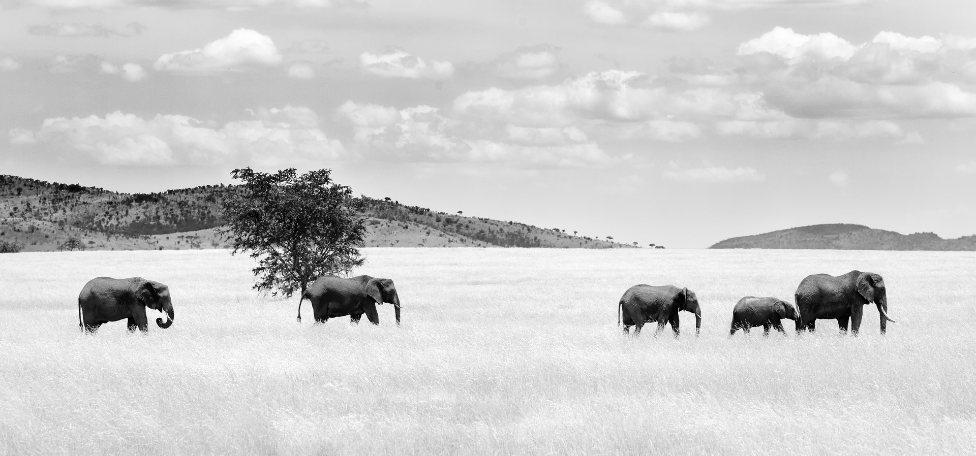 Elephants on the Serengeti.jpg