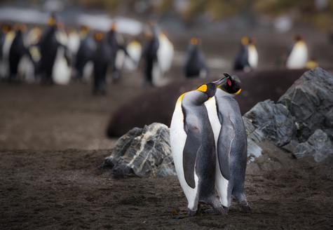 Penguin Love.jpg
