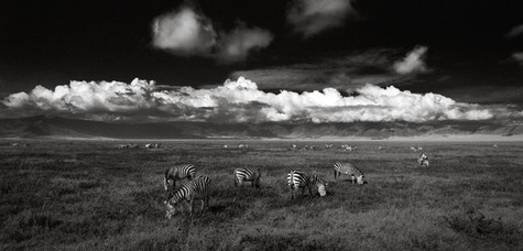 Zebras - Ngorongoro Crater.jpg