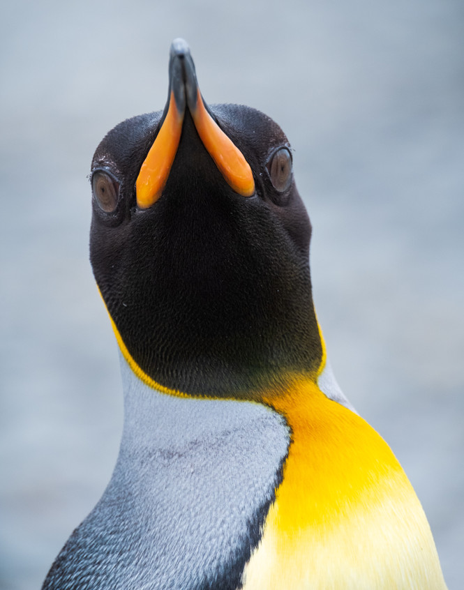 Beak to Beak.jpg