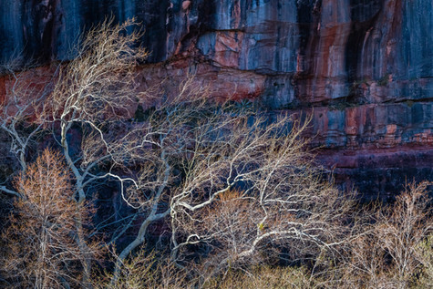 Wind Swept Glowing Branches.jpg