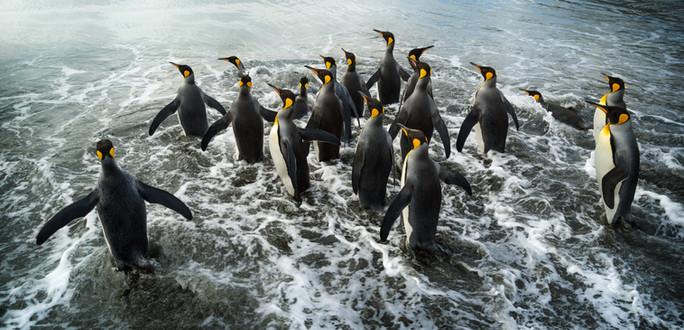 Into_the_Ocean_•_St._Andrews_Bay.jpg