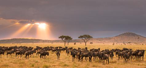 Wildebeest Migration.jpg