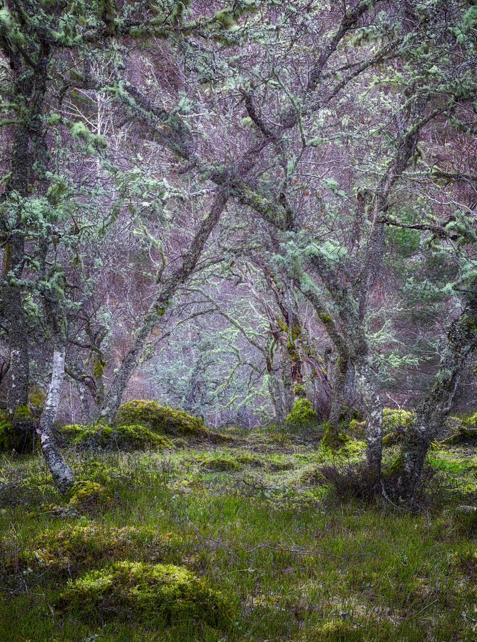 Faerie Forest.jpg