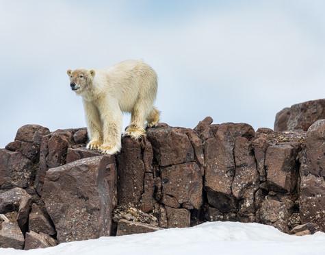 Lookout Bear.jpg
