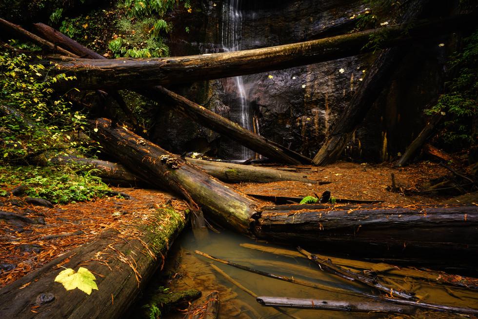Silver Falls Logs.jpg