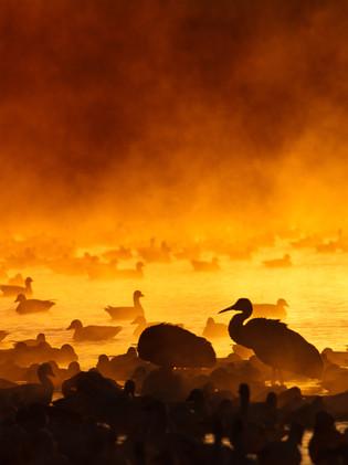 Fire in the Mist.jpg