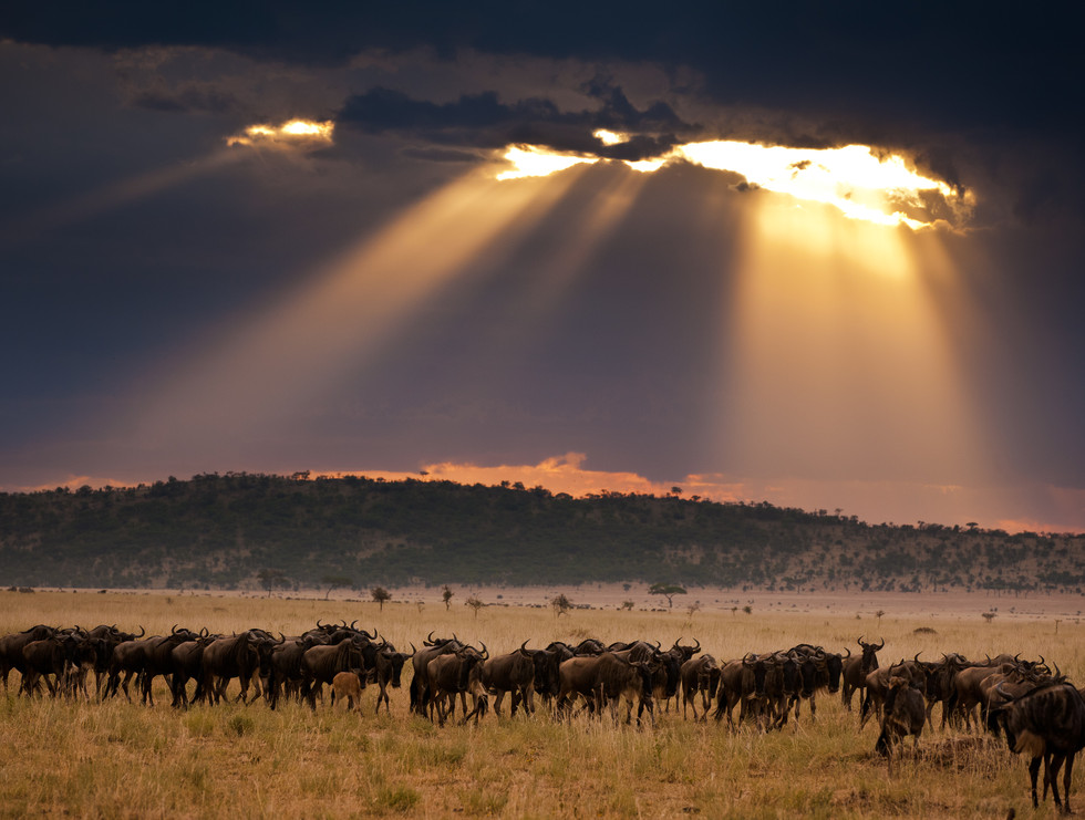 Blessed Migration.jpg