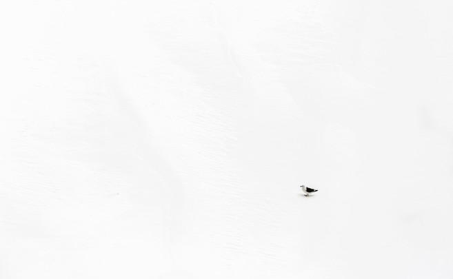 Lone Bird.jpg