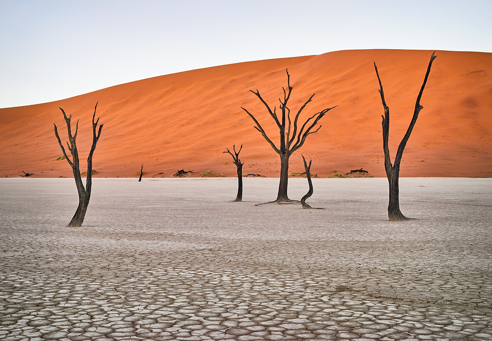 camelthorn tree limbs in front of orange dune
