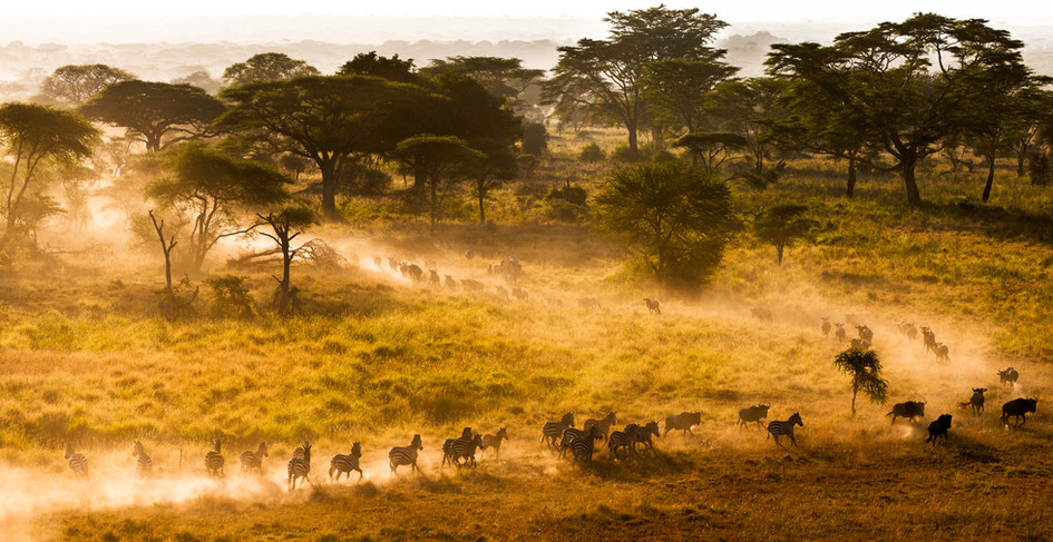 The Run - Serengeti National Park.jpg