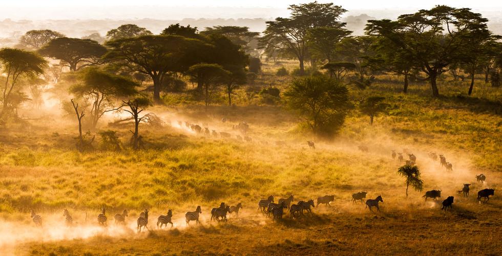 The Run - Serengeti National Park.jpg
