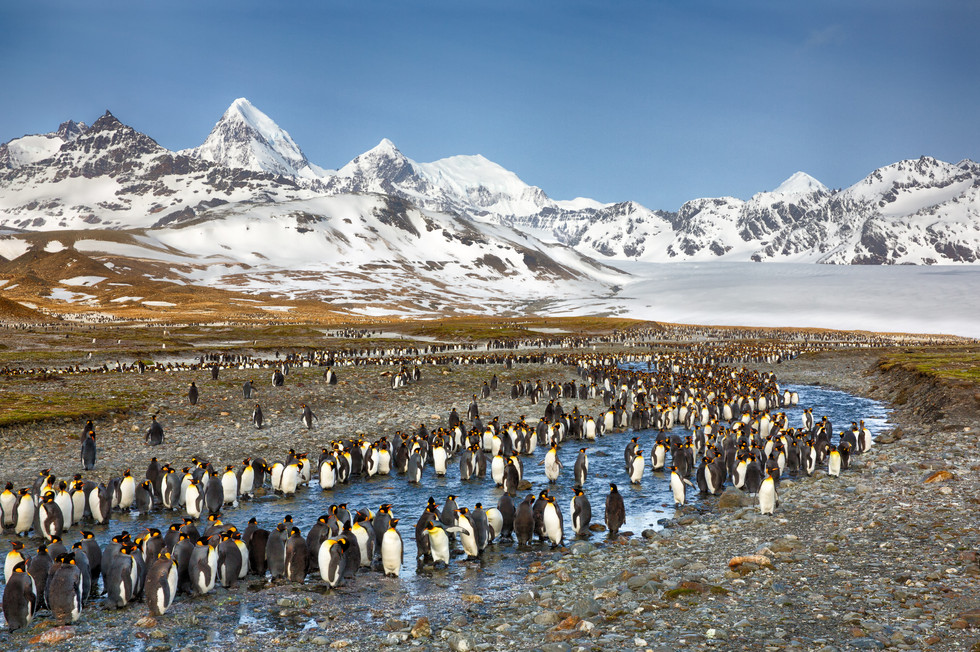 King Penguins by a Stream.jpg