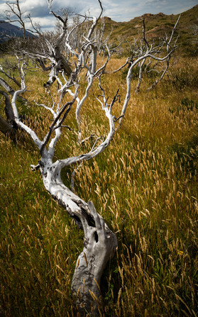Dead Trees and Grasses.jpg