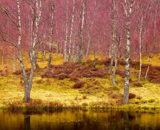 Golden Grass and Rose Limbs.jpg