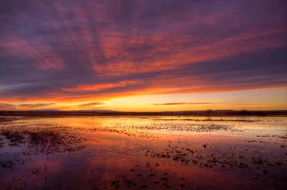 Bosque Sunrise.jpg