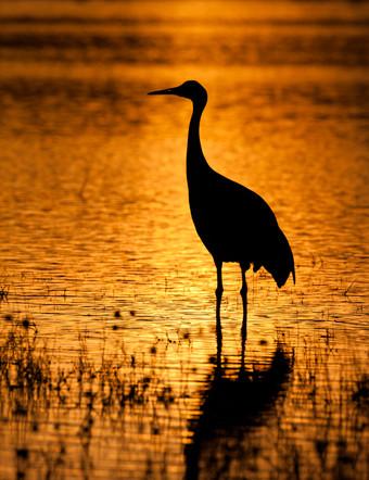 Crane in Gold.jpg