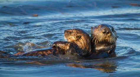 Otter Pals.jpg