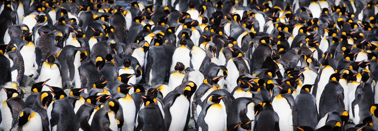 Lost in Penguins.jpg