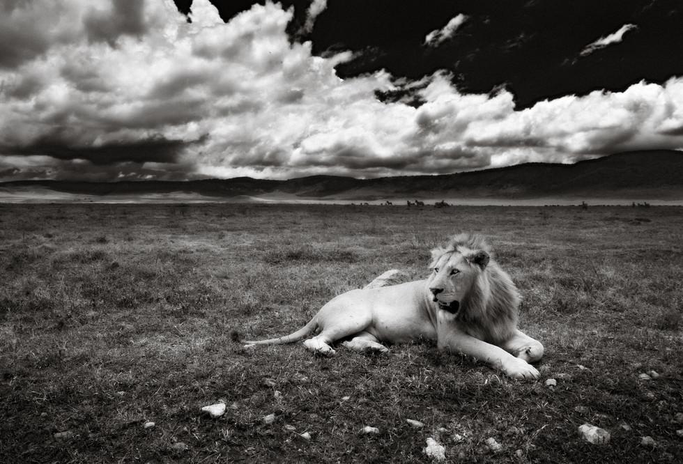 The King - Ngorongoro Crater.jpg