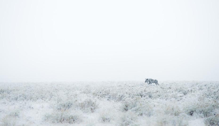 Moose in Storm.jpg