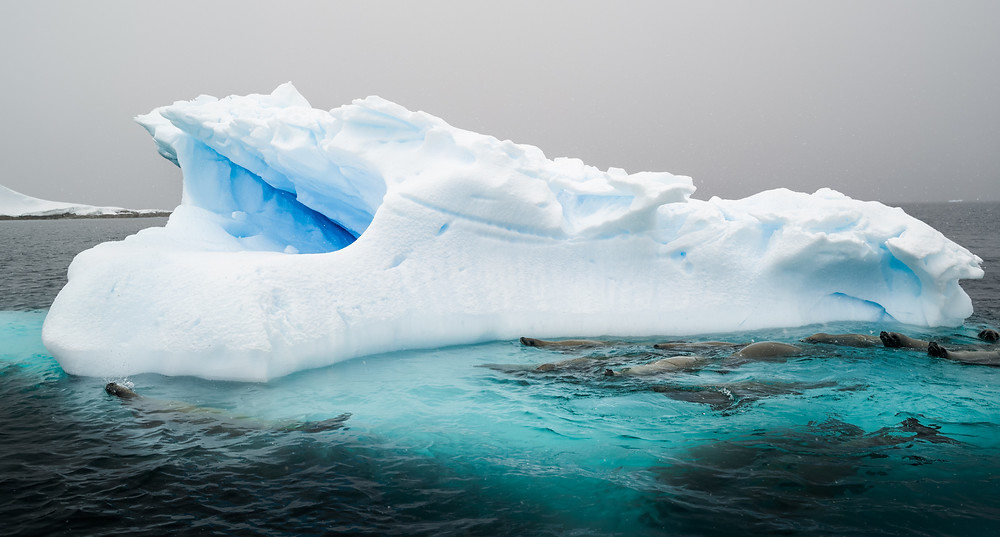 iceberg with seals in water around it
