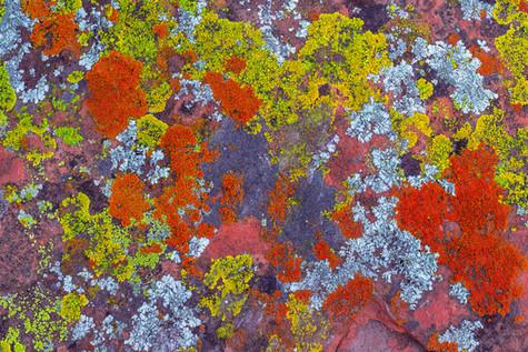Red Rock Painting.jpg