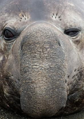 Grumpy Face.jpg
