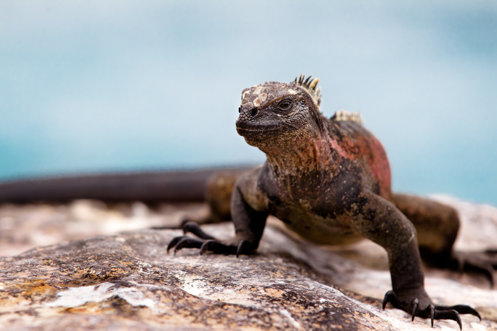 Friendly Lizard.jpg