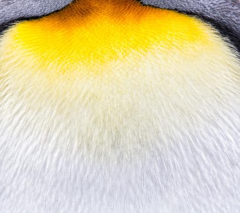 Feather Patterns.jpg