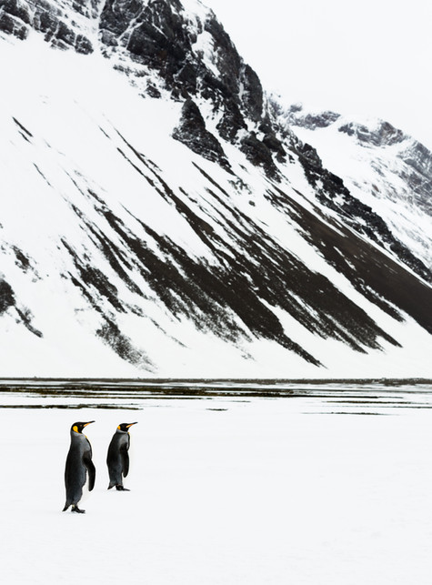 Penguin Pair at Right Whale Bay.jpg