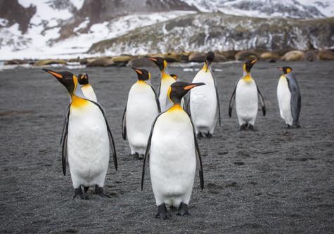 Curious Penguins.jpg