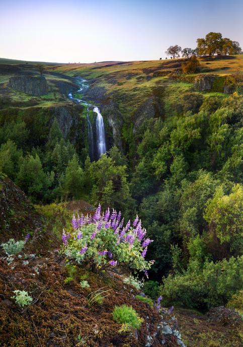 Lupine and Ravine Falls.jpg
