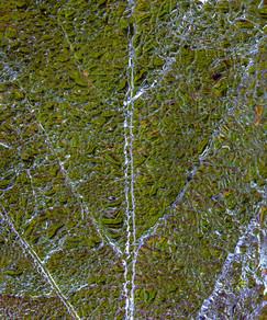 Frozen Leaf Abstract.jpg