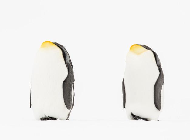 Headless Penguins.jpg