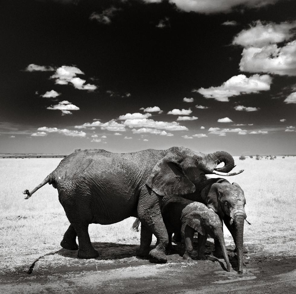 Thirsty Elephants.jpg