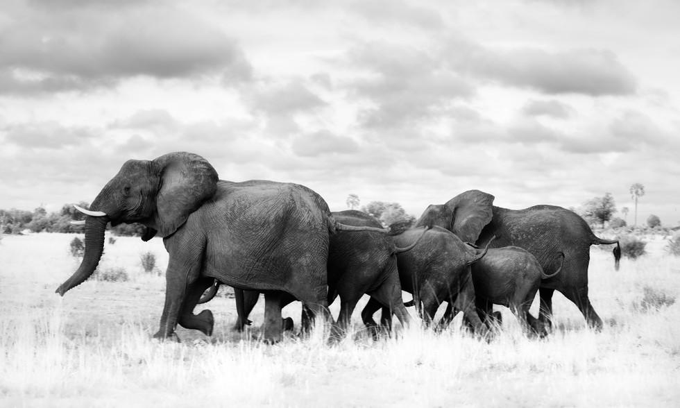Happy Elephants.jpg